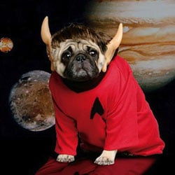 Dog dressed as Spock